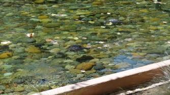 Turtles.. =)